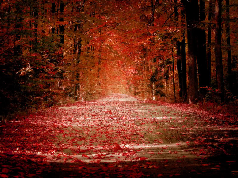 Autumn (source: photobucket)